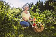 Germany, Northrhine Westphalia, Bornheim, Senior woman with vegetable basket in garden - MFF001219