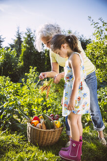 Germany, Northrhine Westphalia, Bornheim, Grandmother and granddaughter working in vegetable garden - MFF001222