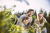 Germany, Northrhine Westphalia, Bornheim, Family working in vegetable garden - MFF001209