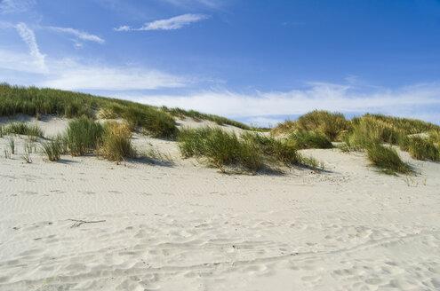 Germany, Lower Saxony, East Frisian Island, Juist, dune landscape - ODF000799