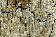 United Kingdom, Wood texture - MJOF000677
