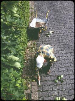 Man working in garden - SHIF000063