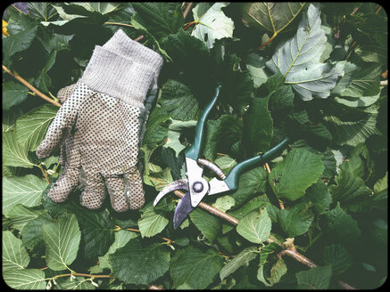 Gloves and hedge trimmer in garden - SHIF000065