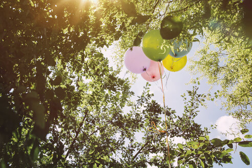 Helium ballons hanging in trees - MFF001234