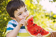 Boy eating slice of watermelon in garden - MFF001295