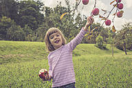 Portrait of smiling little girl picking apples from a tree - LVF001783