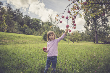 Little picking apples from a tree - LVF001785