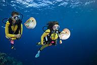 Oceania, Palau, Divers watching Palau nautilusses, Nautilus belauensis, in Pacific Ocean - JWAF000199