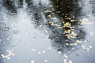 Raindrops falling on water - HHF004869