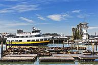 USA, California, San Francisco, Sea lions at Pier 39 - FO007030