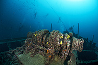 Croatia, Cres, Wreck diving at wreck Lina - ZC000175