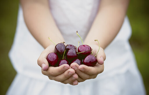 Girl's hands holding cherries - ASCF000035