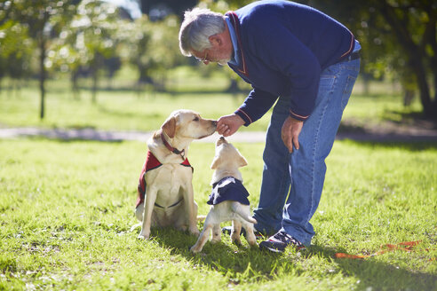Two guide dogs at dog training - ZEF000991