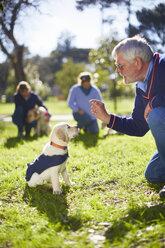 Puppy at dog training - ZEF000993