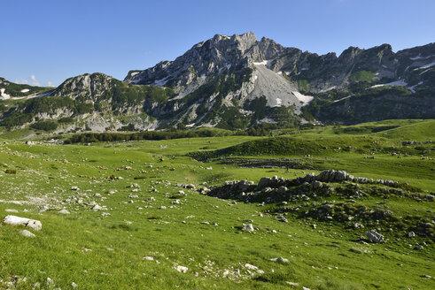 Montenegro, Durmitor National Park, Alpine pasture at Valoviti Do - ES001375