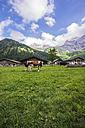 Austria, Tyrol, Karwendel mountains, Grosser Ahornboden, Engalm, Cows - THAF000715