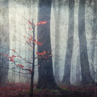 Last leaves at little beech tree - DWI000220