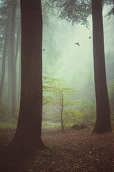 Three birds flying at foggy forest - DWI000210