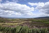 UK, Scotland, view over heath landscape to Dornoch Firth - ELF001314