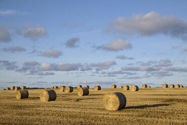United Kingdom, Scotland, straw bales on a field - ELF001350