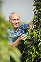 Portrait of smiling gardener pruning plants in a park - UUF002032