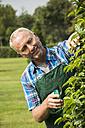 Portrait of gardener pruning plants in a park - UUF002035