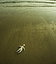 Doll lying on wet sandy beach at waterside - UU002002