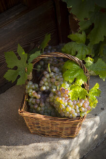 Wickerbasket of grapes and vine leaves - LVF001938