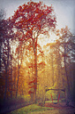 Germany, near Wuppertal, autumn forest and swing - DWI000225
