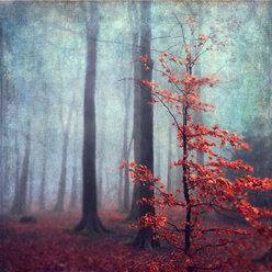Germany, near Wuppertal, Last leaves at little beech tree - DWI000231