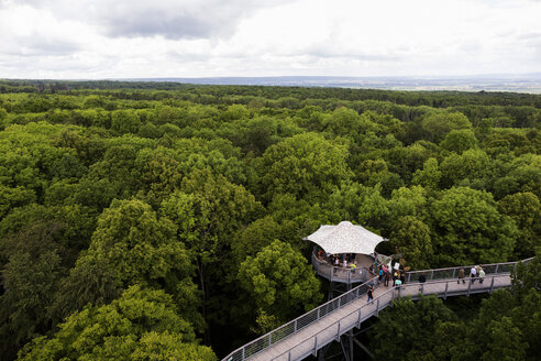 Germany, Thuringia, Hainich, canopy walkway Hainich - TKF000407