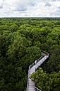 Germany, Thuringia, Hainich, canopy walkway Hainich - TKF000408