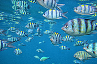 Malaysia, South China Sea, Perhentian island, group of tropical fish - DSGF000326