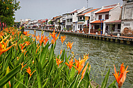 Malaysia, Malacca city, flowers and house by the riverside - DSGF000291