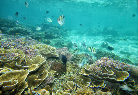 Malaysia, South China Sea, Tioman Island, Coral reef - DSGF000812