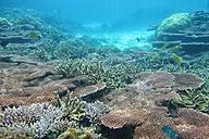 Malaysia, South China Sea, Tioman Island, Coral reef - DSGF000329