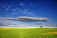 Spain, Province of Zamora, tree in the middle of a crop field - DSGF000820