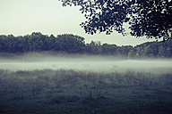 Germany, Saxony, Moritzburg, game preserve in the morning mist, red deer - MJ001365