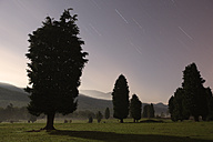 Spain, Silhouettes of trees at Gorbea Natural Park - DSGF000592