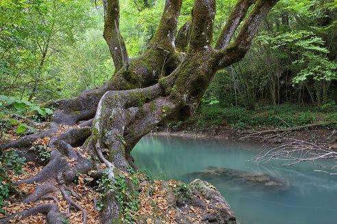 Spain, Cuenca, Hoz de Beteta, Trees at Guadiwla river - DSGF000600