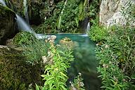Spain, Urbasa y Andia Natural Park, Urederra river flowing between trees - DSGF000699