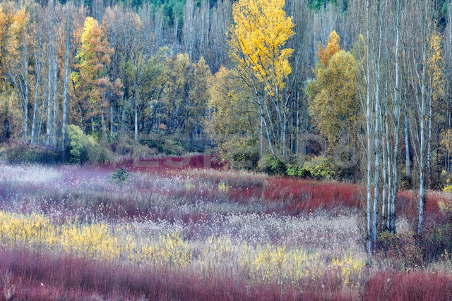 Spain, Cuenca, Wicker cultivation in Canamares in autumn - DSGF000608 - David Santiago Garcia/Westend61