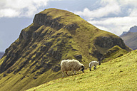 UK, Scotland, Isle of Skye, Quiraing, sheep on meadow - DLF000010