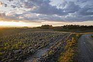 Italy, Tuscany, Siena Province, Crete Senesi, Landscape at sunset - MYF000594