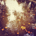Puddle on pavement with utumn leaves - GWF003194
