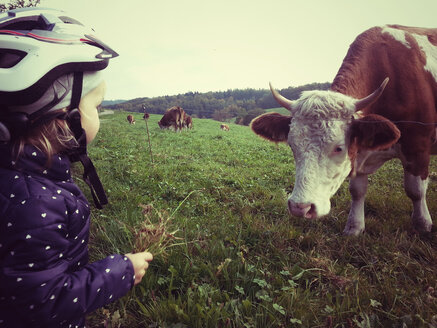 Girl feeding cow - ALF000237