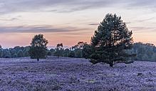 Germany, Lower Saxony, Heath district, Lueneburg Heath after sunset - PVCF000133
