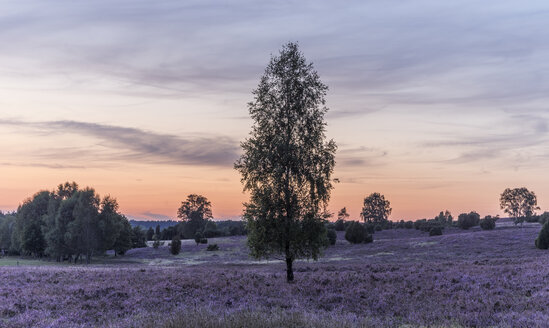 Germany, Lower Saxony, Heath district, Lueneburg Heath after sunset - PVCF000135