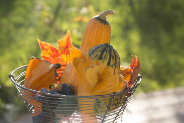 Wire basket of decorative gourds and autumn leaves at sunlight - SARF000909