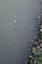 Seagull, Laridae, sitting on a rope above Danube River - OPF000012
